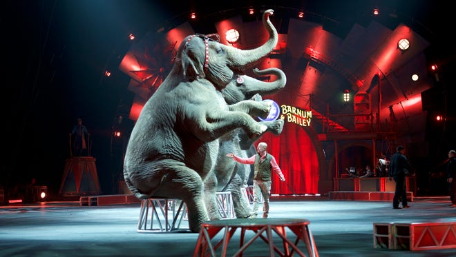 Animal trainer Ryan Henning stands below a line of seated elephants in Wilkes-Barre, Pa., on May 1, 2016.  The Ringling Bros.and Barnum  and  Bailey circus will be retiring elephants from the circus after their performances that day.