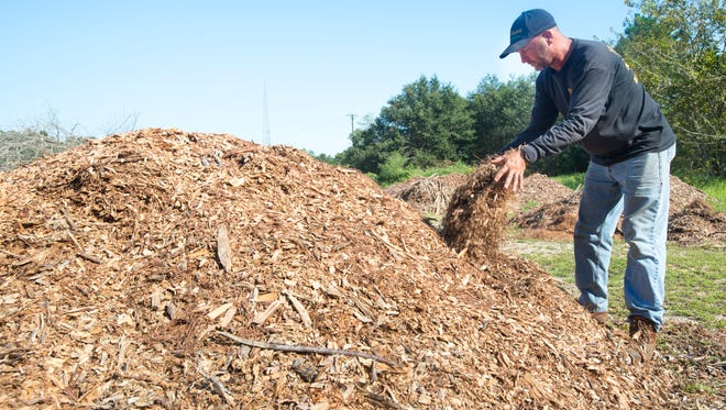 "H. ""Joc"" Jacques, of Eager Beaver Professional Tree Care, shows the mulch that he plans to produce at the proposed Wedgewood Recycling Facility on Longleaf Drive in Pensacola on Wednesday, September 21, 2016.  The County Commission will be holding a hearing about this proposed facility on Thursday, September 22."
