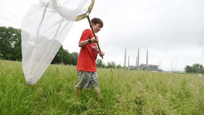 Coshocton Elementary School sixth grader Steven Herbert looks for insects at AEP Conesville Generating Station's Earth Day celebration on Wednesday.