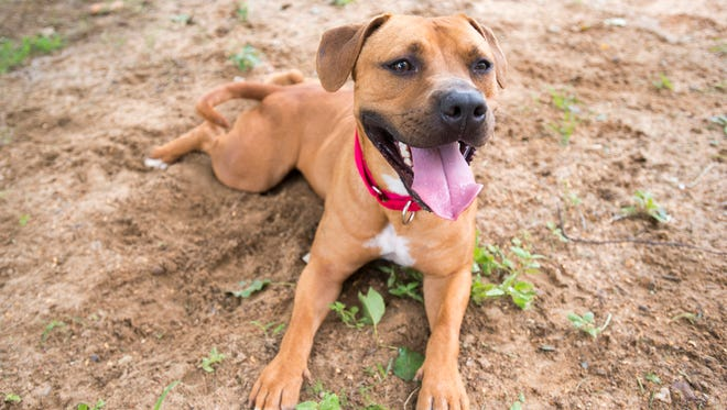 Rico takes a rest while playing in the yard at the Escambia County Animal Shelter in Pensacola on Friday, May 25, 2018.