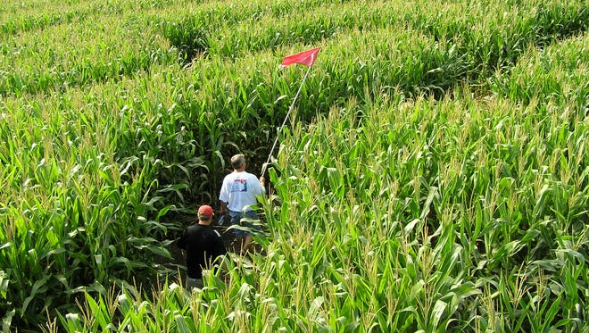 There's a chill in the air in some places.  Farms beckon with fun corn mazes across the country.  At the Treinen Farm in Lodi, Wis., people carry a flagged pole as they move through the corn maze.