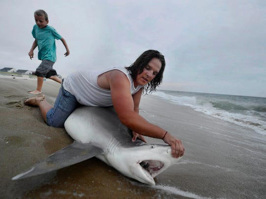 Taylor Thornton pulls open the mouth of a 6 foot 150 pound shark on the beach in South Bethany, De., Wednesday, June 17, 2015. Thornton, originally from Dallastown, spends as much time as he can fishing for sharks at night off the beach behind his grandparents' home. After catching, Thornton quickly releases the sharks back into the ocean.