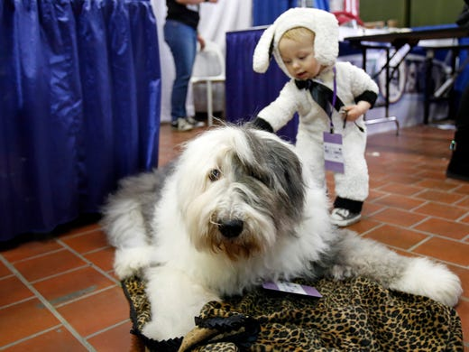 Westminster Kennel Club Dog Show: Four Dogs Reach Best Of