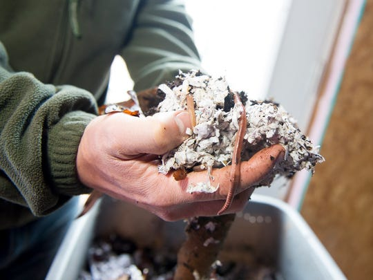 Tony Campisi, 26, holds up a pile of earth worms and compost material at his East Berlin home. In January, Campisi launched a new business venture that seeks to make a positive impact on the environment by helping individuals and businesses compost their own waste. Campisi uses a method called vermicomposting that utilizes thousands of earthworms housed in a special light and temperature controlled environment. The operation requires dozens of 25-gallon containers, each filled with between 2,000 and 3,000 earthworms that can compost about five pounds of waste a day.