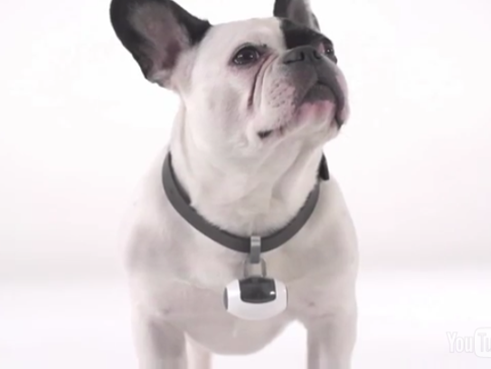 The PawsCam lets you live vicariously through your