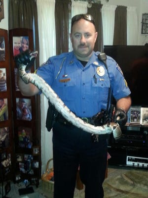 Mount Veron police Cpl. Shaun Cobb, moments after removing a 5-foot python from Leadeana Oetker's arm Friday.