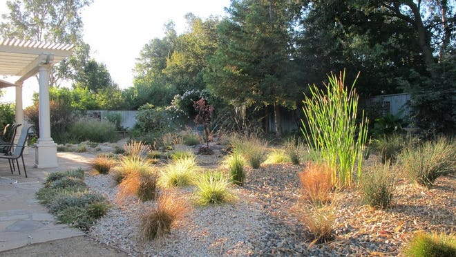 Ann Savageau shows her sustainable drought-tolerant garden, which includes cattail, sedge and rush in the foreground and fescue, salvia, penstemon in the background, in Davis, California. As many parts of the country struggle with drought, heavy downpours and rising water bills, the move toward sustainable gardening is picking up steam, experts say.