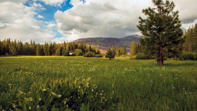 This undated photo provided by The Trust for Public Land shows Ackerson Meadow in Yosemite National Park, Calif. Visitors to the park now have more room to explore nature with the announcement on Wed. Sept. 7, 2016 that the park's western boundary has expanded to include Ackerson Meadow, 400 acres of tree-covered Sierra Nevada foothills, grassland and a creek that flows into the Tuolumne River. This is the park's biggest expansion in nearly 70 years, and will serve as wildlife habitat.