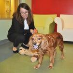 At the helm: Sarah Baeckler Davis, Humane Society Naples