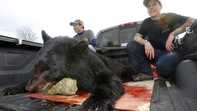 Abel and Jimmy Colazzo of Wayne pose with a 250-pound male black bear they killed at the Pequest Wildlife Management Area in Oxford during a New Jersey bear hunt.