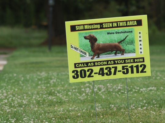 Donna Watson has spent more than three years searching for her lost miniature dachshund, Rudy. Recently, DelDOT fined Watson $175 for lost dog signs posted on utility poles in the area.