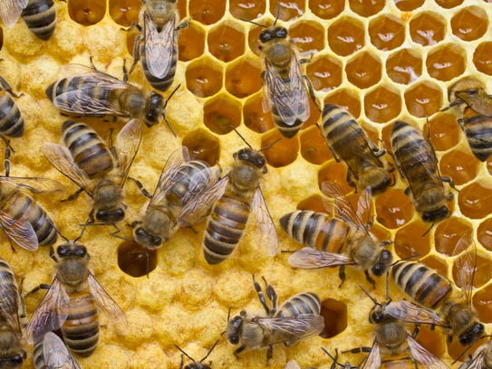 Bees convert nectar into honey, the only natural food