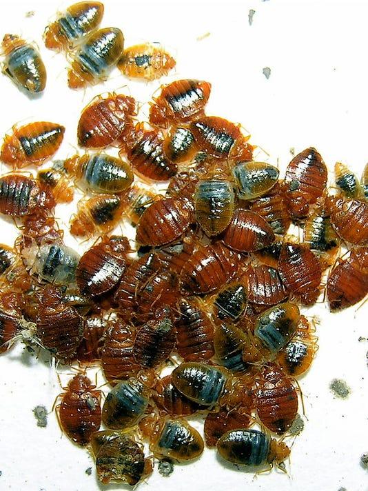 Bedbug logo