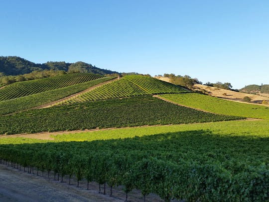 The south-facing vineyards at Abacela, just outside of Roseburg.