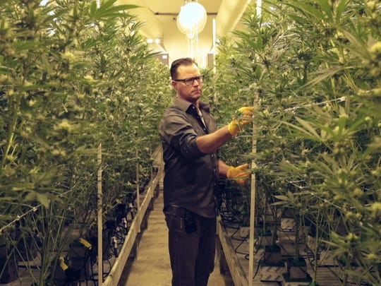 Jeff Homolya examines marijuana plants at Canndescent in Desert Hot Springs, Calif., where he works as the Cultivation Manager, March 7, 2018.