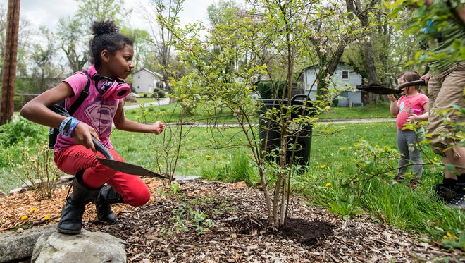 Siemone Hayden-Gibson, 8, spreads coffee grounds around blueberry bushes at Shiloh community garden during a weekly workday and Asheville GreenWorks' inaugural citywide neighborhood cleanup day on Saturday.