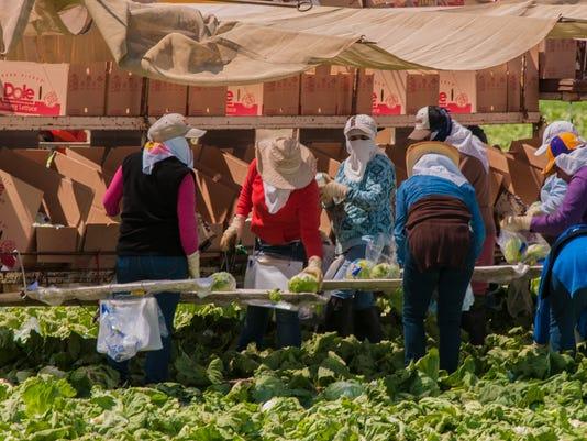636539817860439581-Public-domain-photo-California-farm-workers.-Photo-by-Bob-Nichols-USDA..jpg