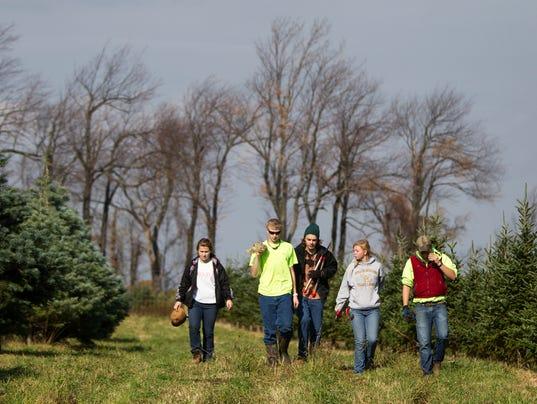 NY Christmas tree farms