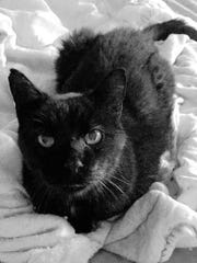 Yogi Berra, a senior cat who hasn't had many breaks in life, is waiting for his forever home with Mt. Olive TNR.
