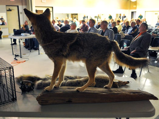 story news coyote town hall addresses beachside owners fears