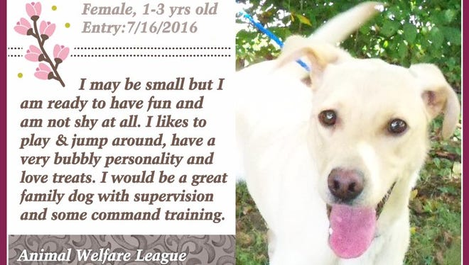 Bambie is available for adoption at Animal Welfare League.