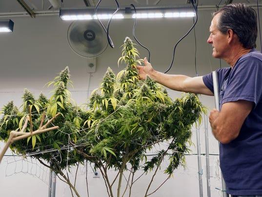 636365240937076830-maine-marijuana-2017-Hughes-1236.JPG