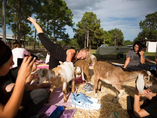 Stacie Thompson practices a yoga pose with the goats