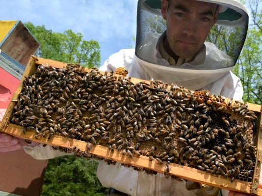 635985644882431640-NAS-Sig-Bliss-Bees-01.jpg