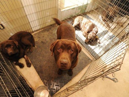 zan 0401 poisoned dogs 001.JPG