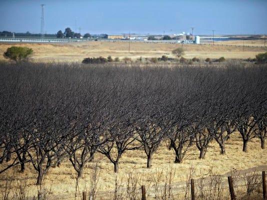 -California Drought NA_Robl.jpg_20140226.jpg