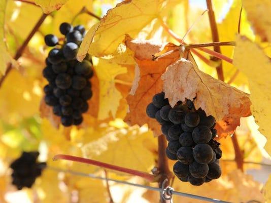SNA0315 grape crush report