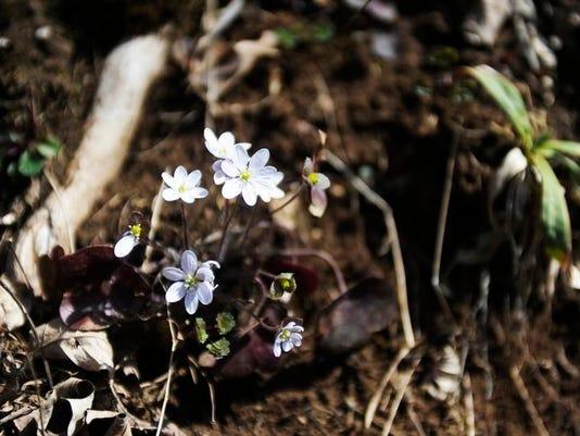 wildflowers_001.JPG