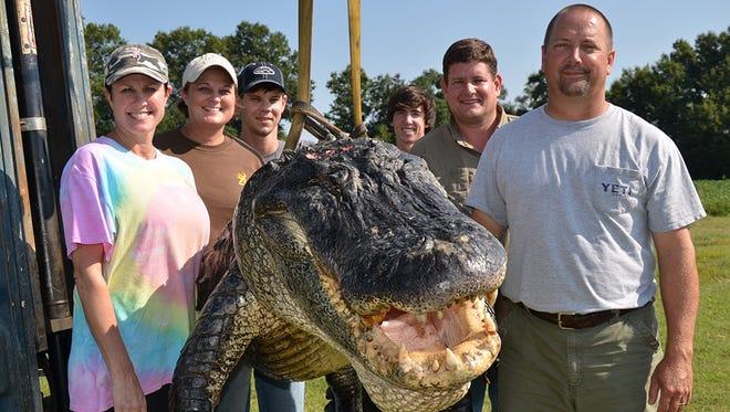 Alligator possession permits for public waters go on sale tomorrow.