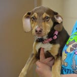 Former shelter dog helps save 3-year-old girl in Upper Peninsula