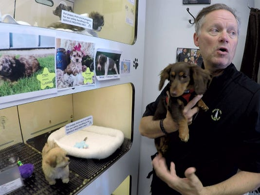 Red Bank puppy sales