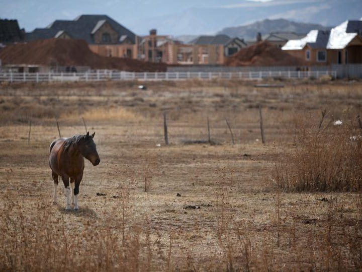 A horse grazes in a field while new homes are constructed