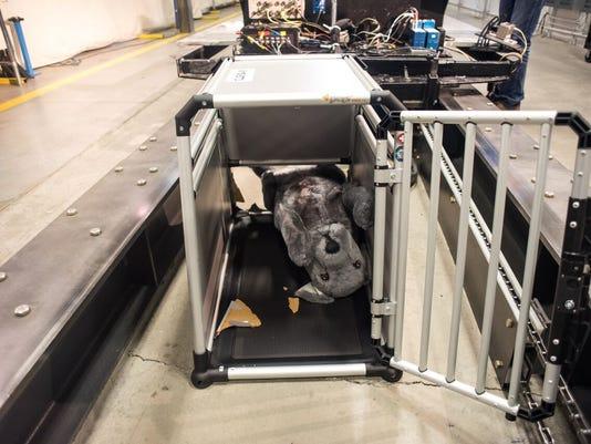 635732732341057514-dog-test