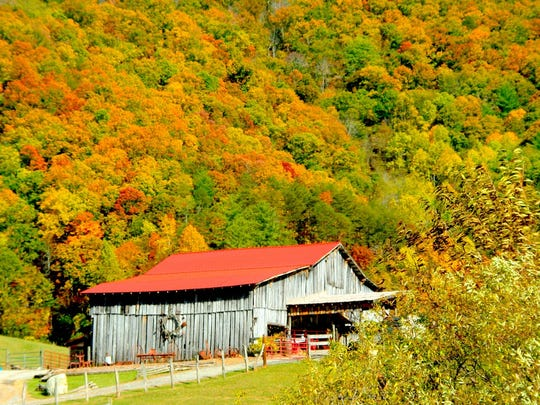 An old country barn set against a mountain in full fall dress always pleases leaf peepers.  This barn is in the Weaverville area.