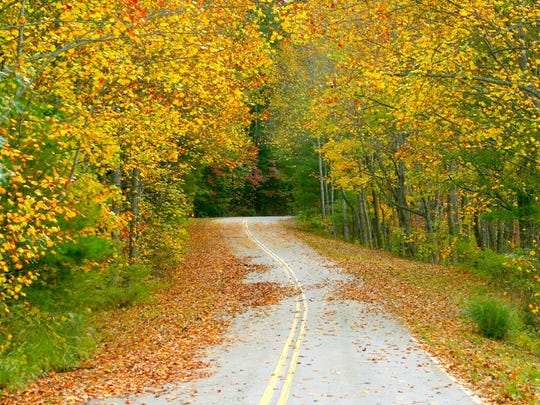 A drive down in rural road in the WNC mountains in the fall  is like being in a painting alive with color.