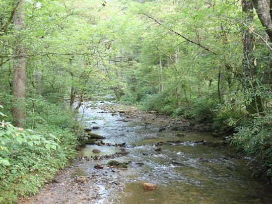 A stream runs through the Pisgah National Forest.