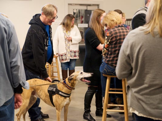 ​Flemington: Meet, greet the greyhounds on Feb. 17 PHOTO CAPTION