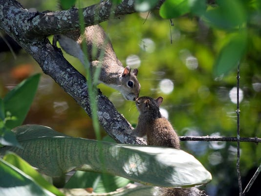 636268970010029803-POINT-7-Scott-Stone-Squirrels.jpeg