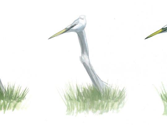 BUR20150629 shrike to egret