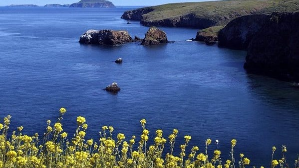 Black mustard blooms highlight a picturesque view to a distant Anacapa Island viewed from Santa Cruz Island.