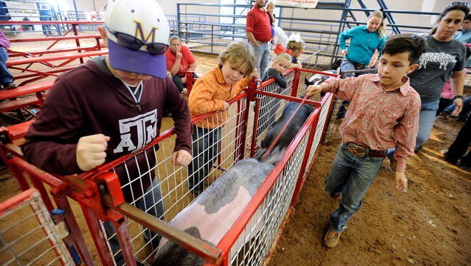 Youngsters watch as pigs pass through the chutes on their way to the show ring during the Taylor County Livestock Show on Friday, Jan. 20, 2017, at the Taylor County Expo Center.