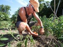 Historic Victory Garden Feeds Muskego Food Pantry