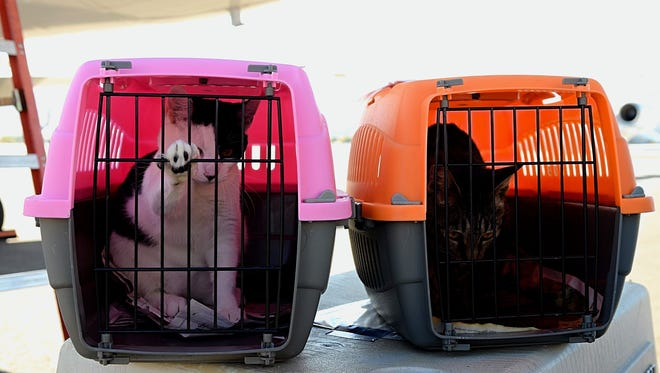 Two cats look out from their kennels at the Reno-Tahoe International Airport  on Oct. 7, 2017.