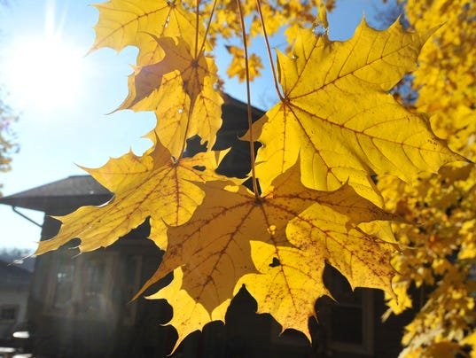 635822521984667272-Yellow-leaves