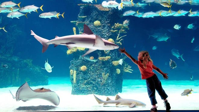Newport Aquarium reopens to the public this week.