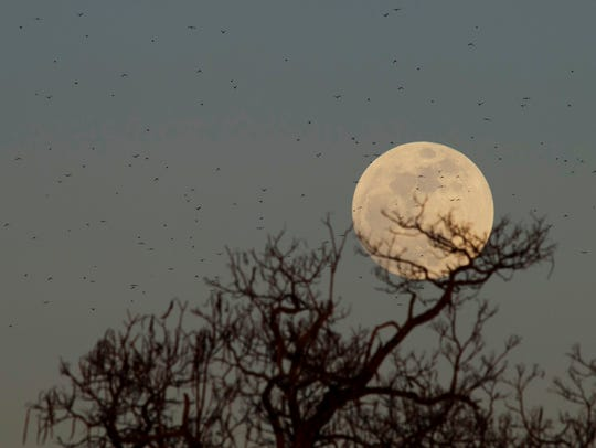 The moon over a Warrick County farm earlier this year.